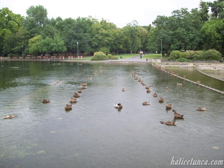 Şehir Parkı-Göl