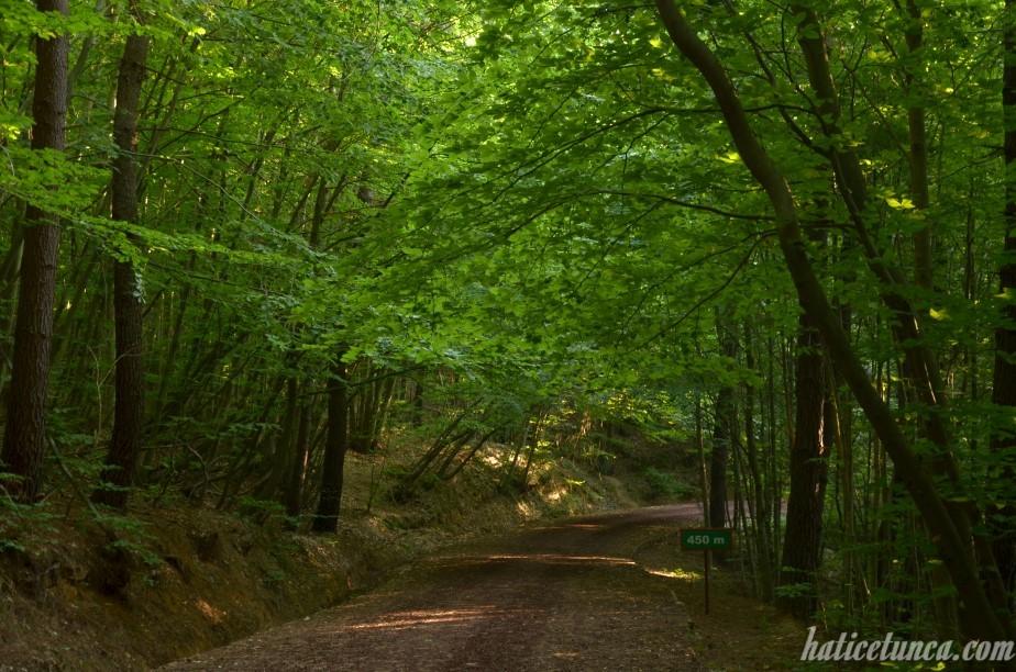Polonezköy Tabiat Parkı-5