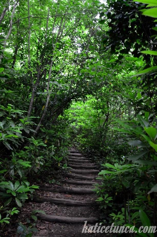 Yoroz Kent Ormanı